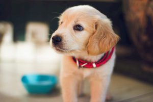 Manage Ringworm in Dog